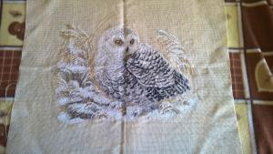 белая сова, Птицы