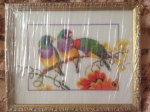 попугаи, Птицы